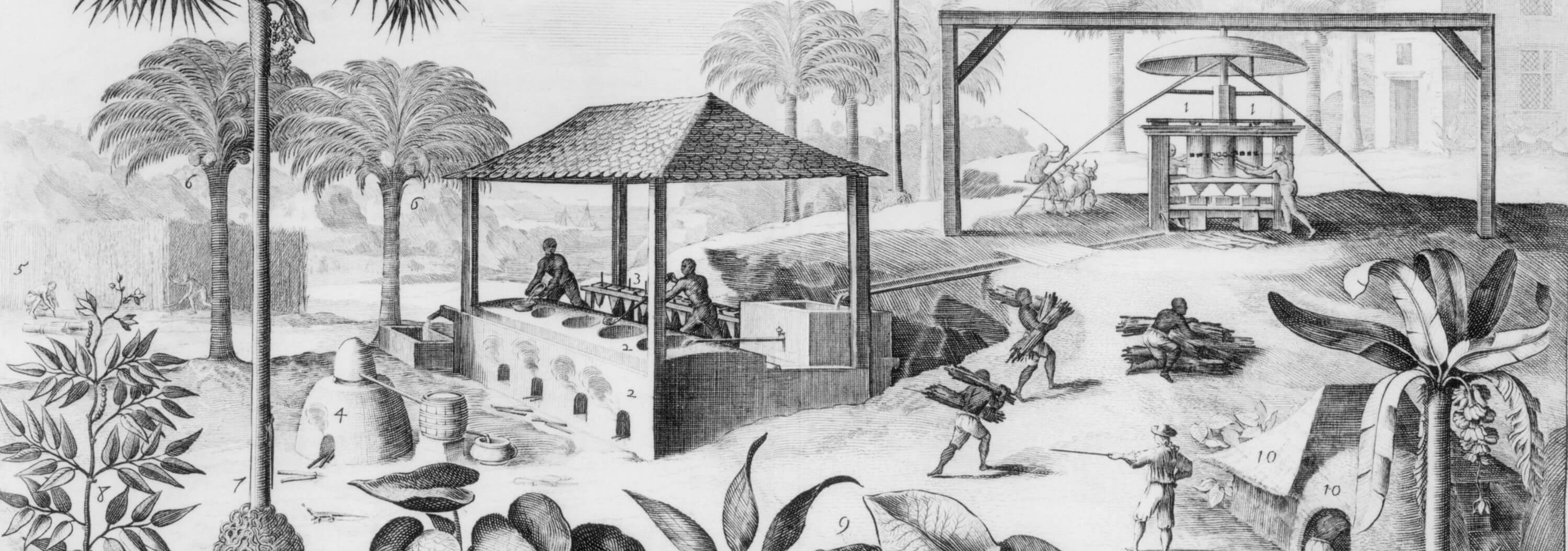essay on slavery in jamaica We will write a cheap essay sample on colonies in jamaica specifically for you for only from slavery to freedom, jamaica has had one of the important economies.